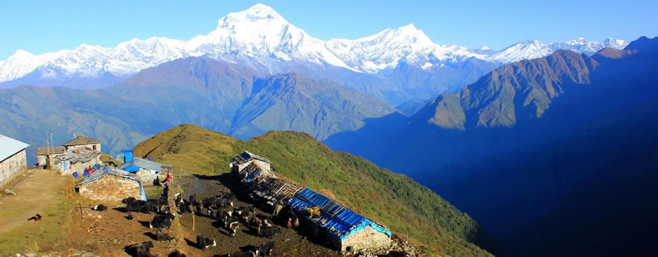 Mt. Dhaulagiri view